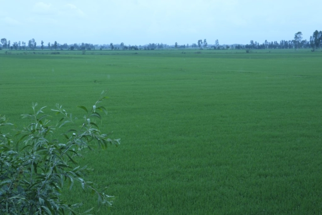 Plain of Reeds